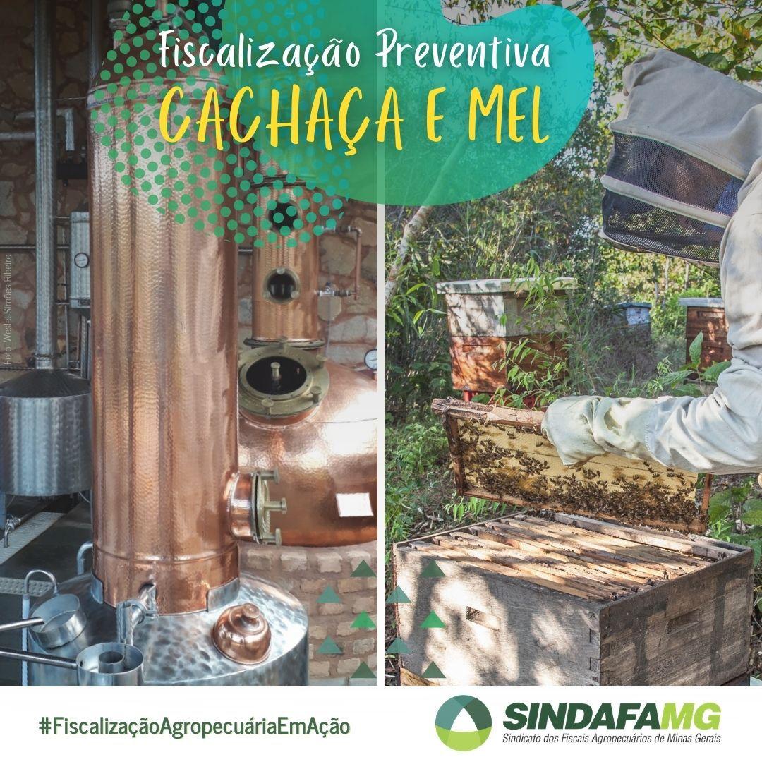 Educação sanitária promove fiscalização preventiva da cachaça e do mel em Minas Gerais