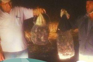 Raiva animal é controlada em Arcos, Córrego Dantas, Iguatama e Pains por meio da captura de morcegos