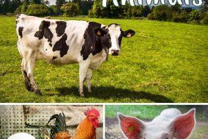 Dia Mundial dos Animais: preservar as espécies para proteger a vida