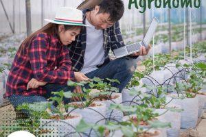 Dia do Engenheiro Agrônomo: profissional atua para garantir a sanidade vegetal e segurança alimentar